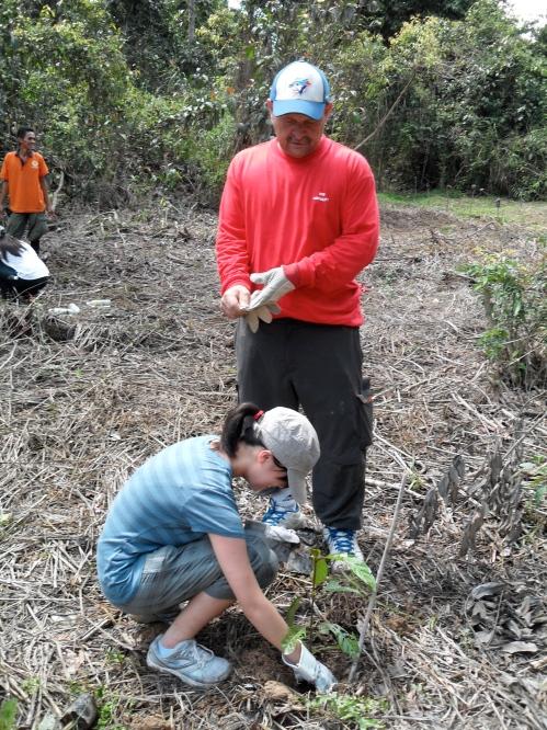 planting trees in borneo