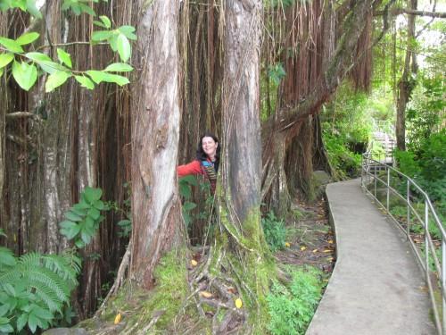hiking akaka falls state park