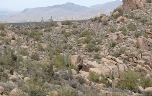 saguaro cactus pinnacle peak