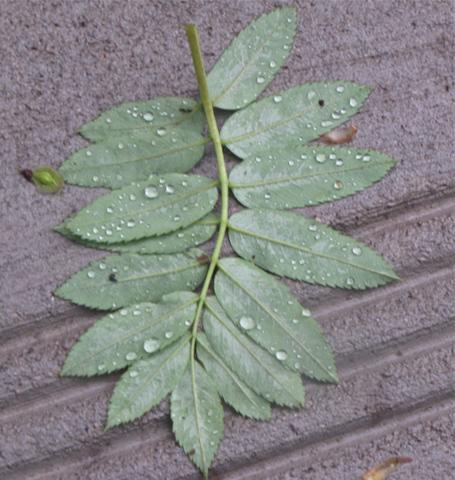 leaf after a rain 2012