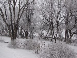 winter in winnipeg