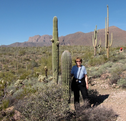 barrel cactus hieroglyphic trail gold canyon