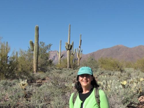 saguaro cacti gold canyon arizona