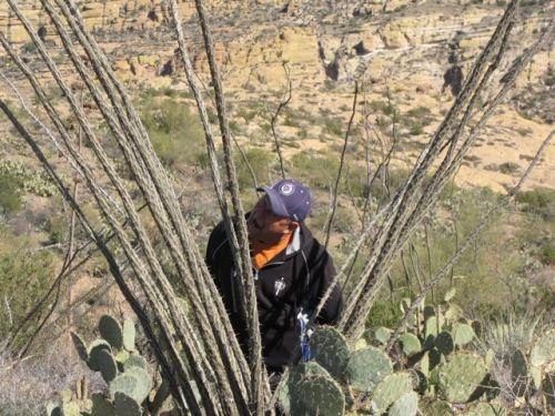 man biting ocotillo cactus