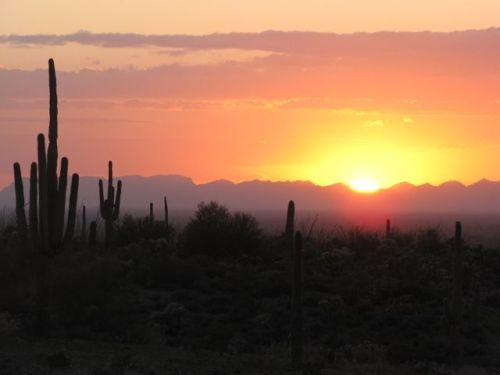 sunset tonto forest