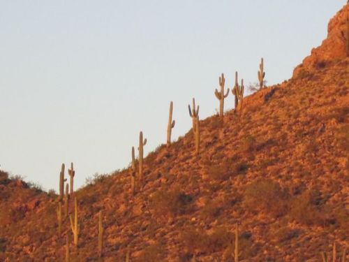 saguaro's at sunset
