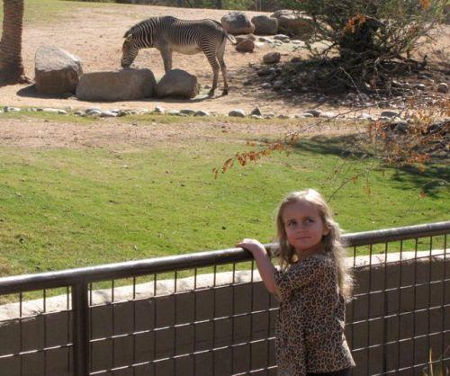 zebra phoenix zoo