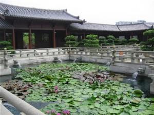 lily pads chi lin nunnery hong kong