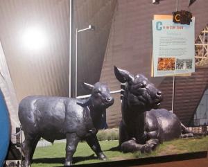 cow town display colorado history musuem