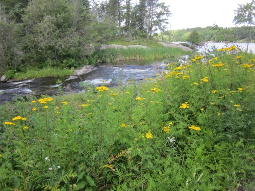 falls and yellow flowers