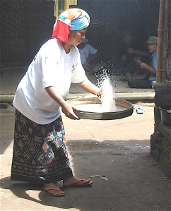 winnowing rice in bali