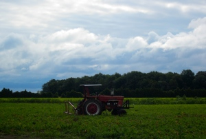 old tractor in a tomato field