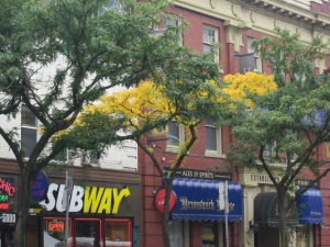 fall tree outside subway in toronto