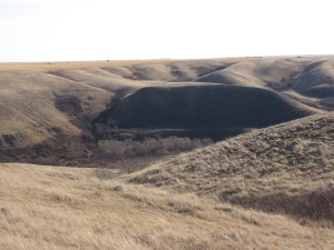 Buffalo Jump in Herschel