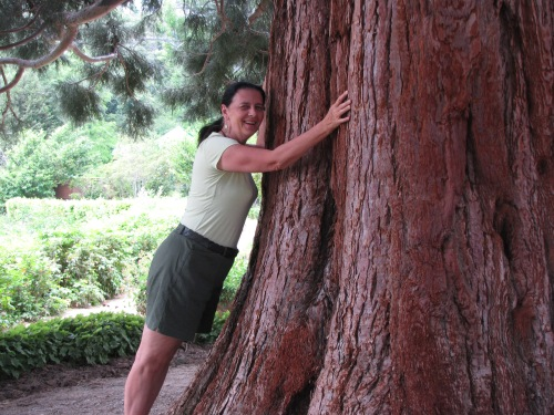 Hugging one of the giant redwoods planted by Governor General Michael Vorontsov