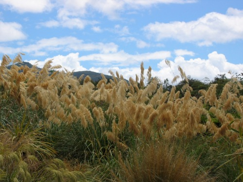 Natural grasses- Photo taken in New Zealand 2008