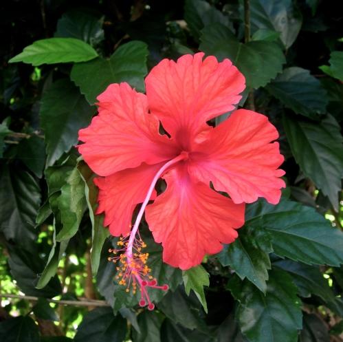 flowers in jamaica