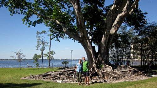 Rudy and Sue Nikkel stand in front of a huge banyon tree on the bank of the Caloosahatchee River