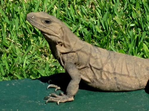 iguna cancun