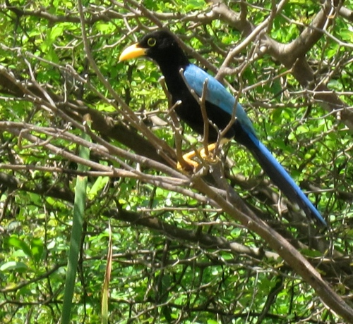 bird in cancun