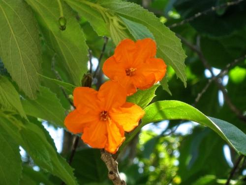 flowers cancun