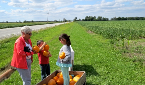 pumpkins piled in a boy's arms
