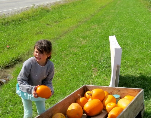 little girl selling pumpkins
