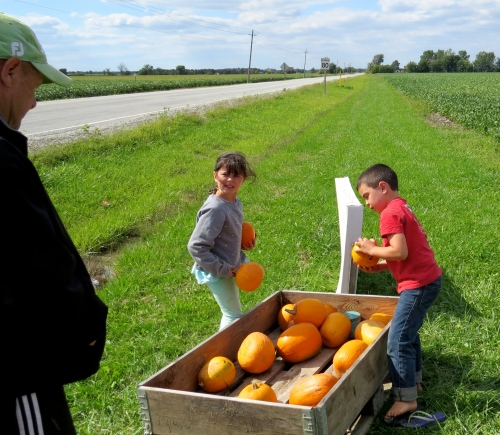 kids selling pumpkins southern ontario