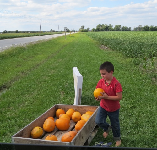 little boy selling pumpkins
