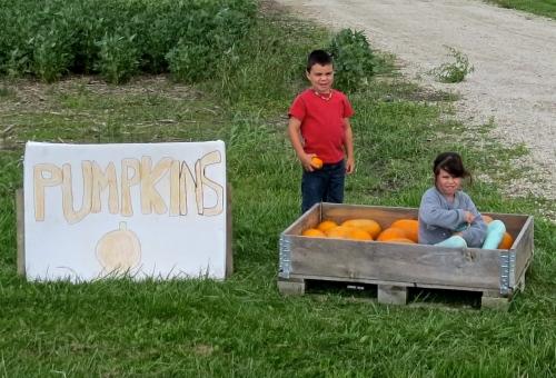kids selling pumpkins
