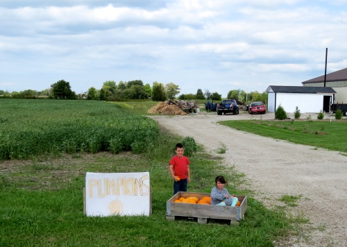 kids selling pumpkins