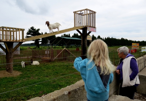 seeing the goats thiessen orchards