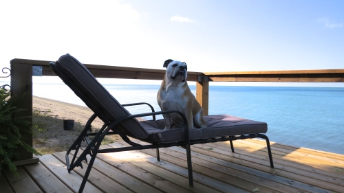 dog on deck chair