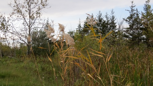 prairie grasses fort whyte manitoba