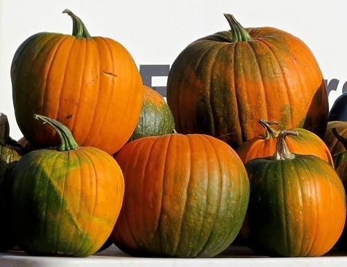 pumpkins saskatoon farmers market