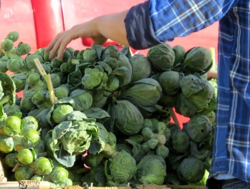 fresh brussel sprouts saskatoon farmers' market