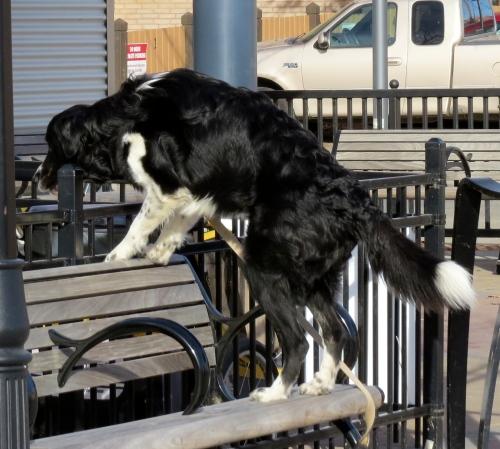 dog on a bench saskatoon farmers market
