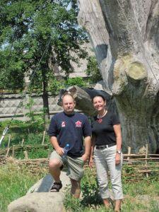 mennonite oak in Zaporozhye.