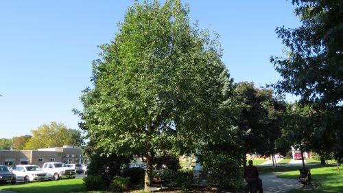 chortitza oak leamington mennonite home