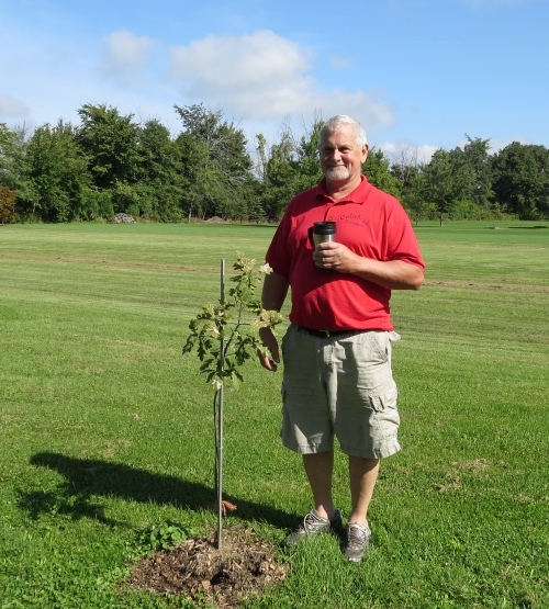 sapling from the chortiza oak in cottam ontario