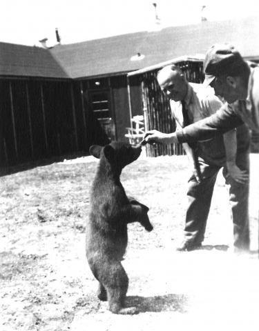 bear with german prisoners of war manitoba