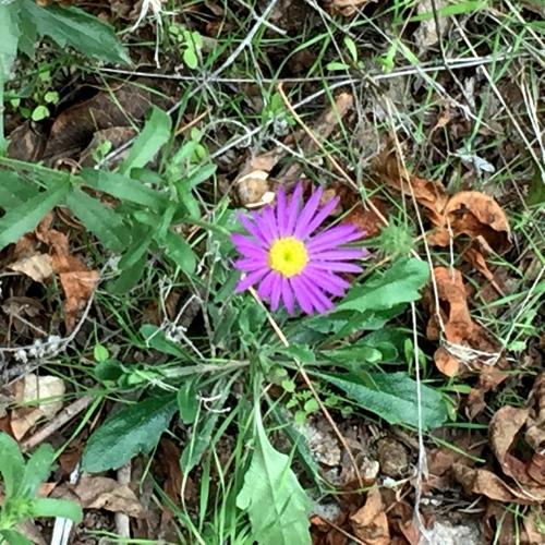 flower on peralta trail