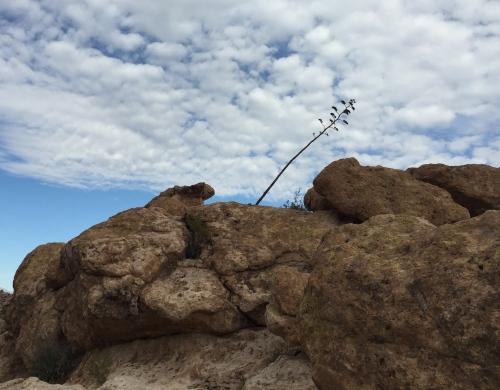 peralta trail hike