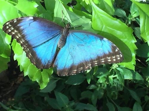 butterfly wonderfland