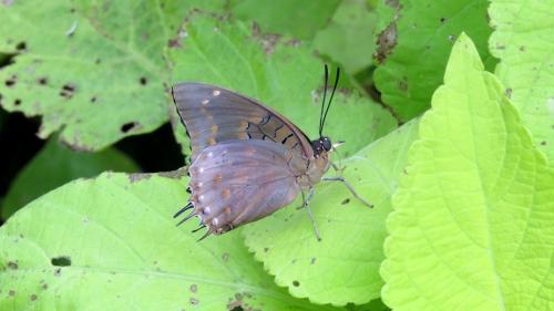 butterfly butterfly wonderland phoenix