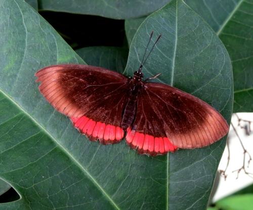 butterfly wonderland phoenix
