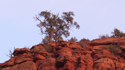 tree cathedral rock sedona