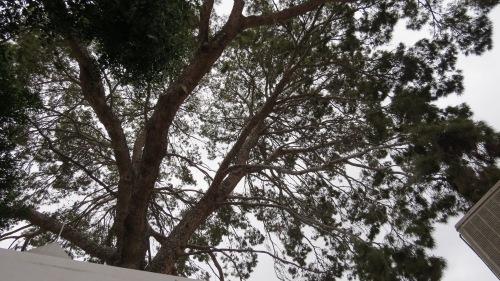 ponderosa pine the house scottsdale