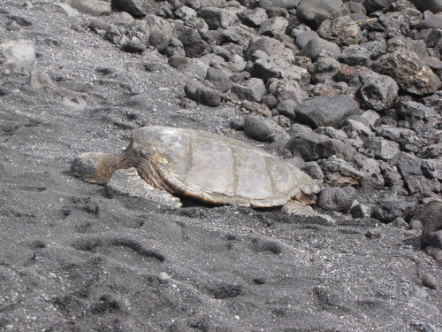 camouflaged turtle