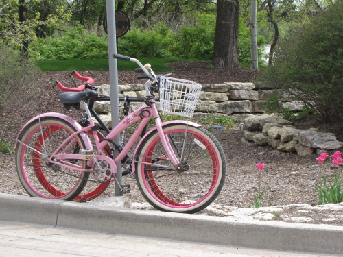 pink bike and tulips spring